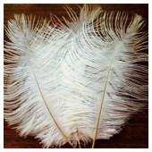 1 шт. Белый цвет. Перо страуса 15-20 см