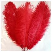 1 шт. Красный цвет. Перо страуса 15-20 см