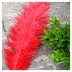 1 шт. Красный цвет. Перо страуса 20-25 см