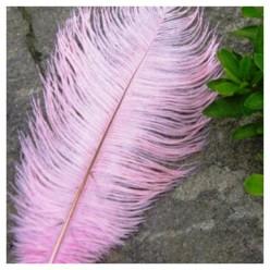 1 шт. Розовый цвет. Перо страуса 20-25 см