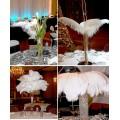 Перья птиц страуса 35-40 см