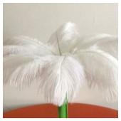 1 шт. Белый цвет. Перо страуса 35-40 см