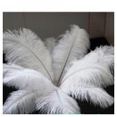 1 шт. Белый цвет. Перья птиц страуса 50-55 см
