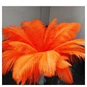 1 шт. Оранжевый цвет. Перья птиц страуса 50-55 см.