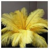 1 шт. Желтый цвет. Перья птиц страуса 50-55 см