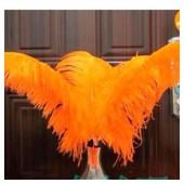 1 шт. Оранжевый цвет. Перья птиц страуса 55-60 см.