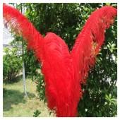 1 шт. Красный цвет. Перья птиц страуса 60-65 см