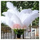 1 шт. Белый цвет.  Перья птиц страуса 70-75 см.  Экстра класс
