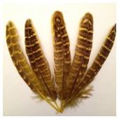 20 шт. Желтый цвет. Перья фазана 13-15 см