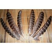 20 шт. Серый цвет. Перья фазана 13-15 см.
