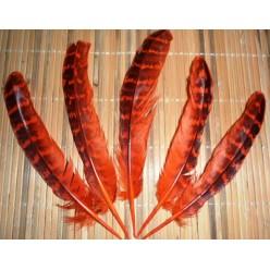 20 шт. Оранжевый цвет. Перья фазана 13-15 см.