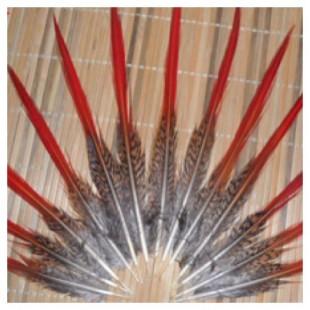 Перья фазана 15-20 см.