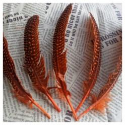 10 шт. Оранжевый с черным. Перья фазана 15-20 см. В крапинку