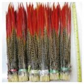 777. 1 шт.  Перья фазана 25-30 см.
