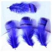10 шт. Синий цвет. Перья фазана 3-6 см. Цветное перо