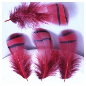 10 шт. Красный цвет. Перья фазана 3-6 см. Цветное перо