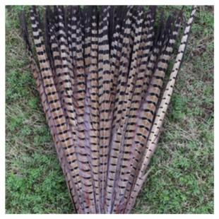 1 шт. Натуральный цвет. Перья фазана 50-55 см. Цветное