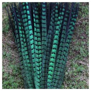 1 шт. Зеленый цвет. Перья фазана 50-55 см. Цветное
