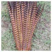 1 шт. Желтый цвет. Перья фазана 50-55 см. Цветное