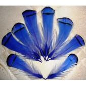10 шт. Синий цвет. Перо фазана 6 см. С полосками
