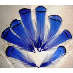 20 шт. Синий цвет. Перо фазана 6 см. С полосками