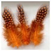 20 шт. Оранжевый цвет. Цесарка 6-12 см. Горошек
