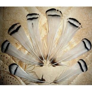 20 шт. Белый цвет. Перо фазана 6 см. С полосками