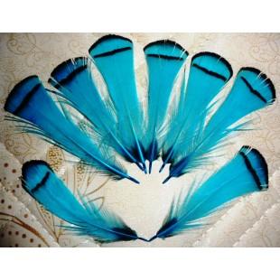 20 шт. Голубой цвет. Перо фазана 6 см. С полосками