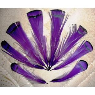 20 шт. Фиолетовый цвет. Перо фазана 6 см. С полосками