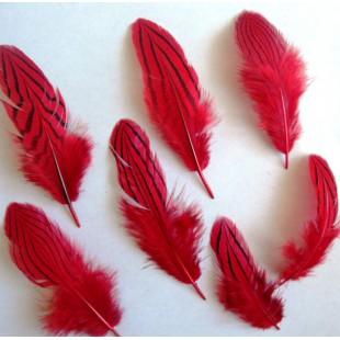 20 шт. Красный цвет. Перо фазана 7-10 см. Коктейль