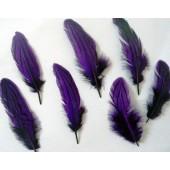 20 шт. Фиолетовый цвет. Перо фазана 7-10 см. Коктейль