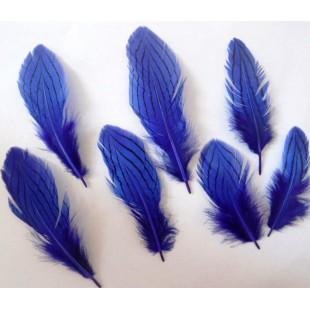 10 шт. Синий цвет. Перо фазана 7-10 см. Коктейль