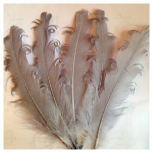20 шт. Серый цвет. Гусиное перо 12-16 см. Кудри