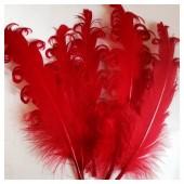 20 шт. Красный цвет. Гусиное перо 12-16 см. Кудри