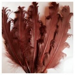 20 шт. Шоколад цвет. Гусиное перо 12-16 см. Кудри