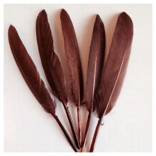 20 шт. Коричневый цвет. Перо петуха 8-14 см.