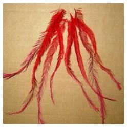 10 шт. Красный цвет. Перо американского петуха 10-15 см. Цветное