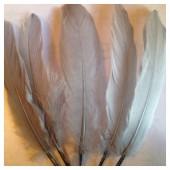 20 шт. Серый цвет. Перо Петуха 15-20 см