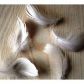20 шт. Белый цвет.  Гусиное перо 4-6 см. Плавающее