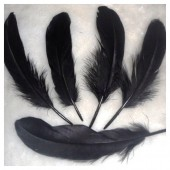 20 шт. Черный цвет. Перо Петуха 10-15 см