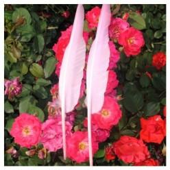 1 шт. Белый цвет. Гусиное перо 30-40 см.