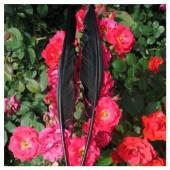 1 шт. Черный цвет.  Гусиное перо 30-40 см.