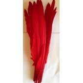 1 шт. Красный цвет.  Перья петуха 30-40 см. Цветная