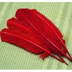 1 шт. Красный цвет. Гусиное перо 25-30 см