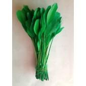 20 шт. Зеленый цвет. Перья петуха. Кисточка 12-17 см. Цветная