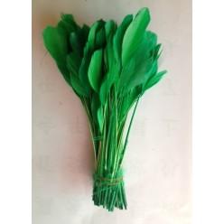 20 шт. Зеленый цвет.  Кисточка цветная 12-17 см