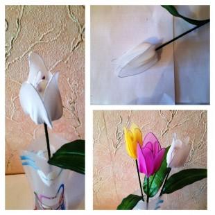 Тюльпаны. Одиночные цветы.