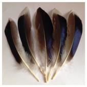 20 шт. Белый цвет. Перья цветной утки 10-15 см.