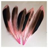 20 шт. Розовый цвет. Перья цветной утки 10-15 см.