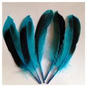 20 шт. Голубой цвет. Перья цветной утки 10-15 см.